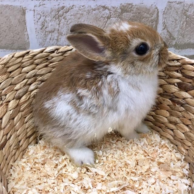 ミニウサギ イメージ